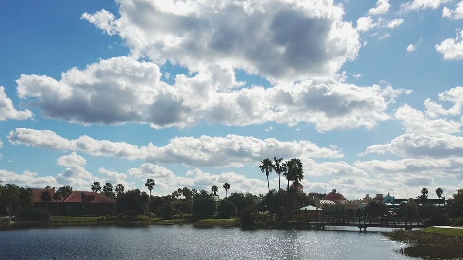 Tree Water Reflection Sky Cloud - Sky Outdoors No People Agriculture Nature Tranquility Beauty In Nature Day Scenics Lake Irrigation Equipment Freshness Beauty Low Angle View Universal Studios  Universal Studios  Universal Studios  Disney Disneyland Disney World First Eyeem Photo