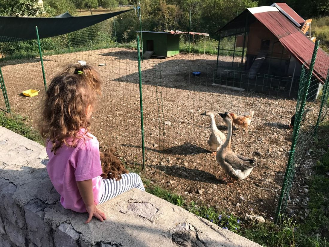 Childhood Girls Children Only One Girl Only Animal Themes Child Domestic Animals One Person Pets Mammal One Animal Outdoors Elementary Age Dog Day Real People Friendship People