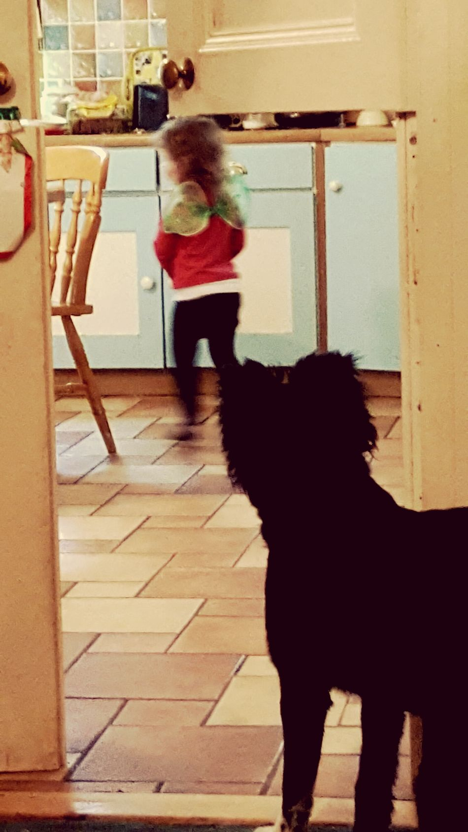 Crazygirl Domestic Animals Indoors  Motion Whats This? Confusedpuppy Fairy Tail One Animal Pets Littlemonsters
