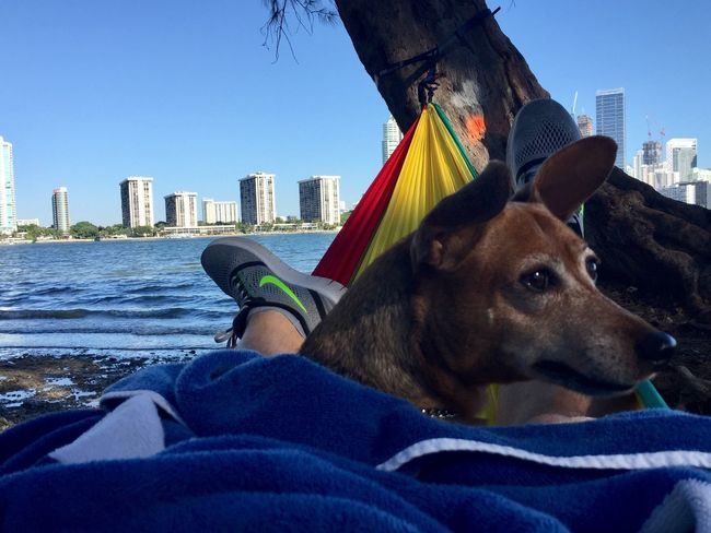 Relaxing Domestic Animals City Doggy Love Hammock Beauty In Nature Outdoors Enohammocks Hammock Time Eyeemdoglover