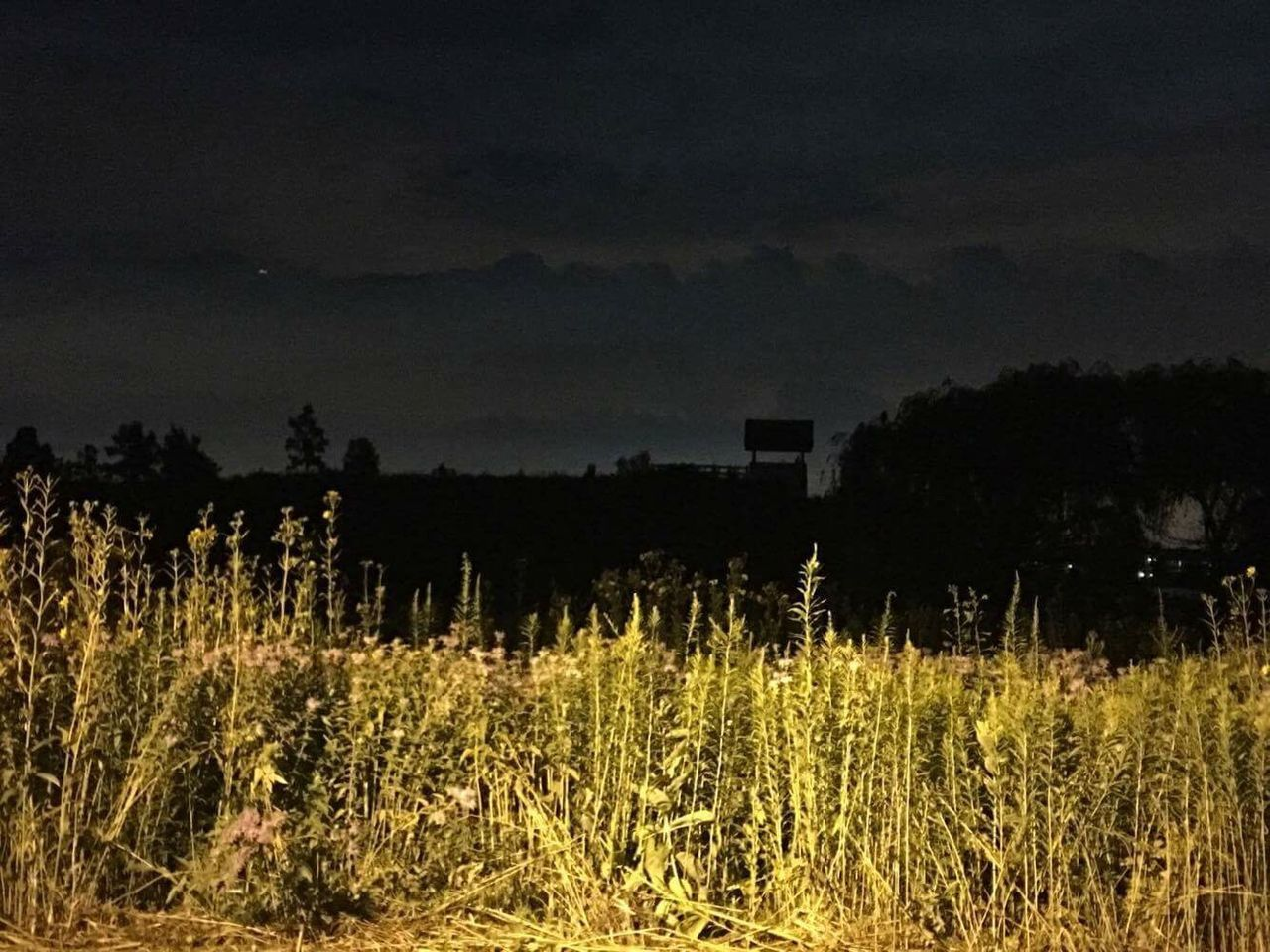 nature, growth, landscape, field, night, silhouette, outdoors, no people, plant, grass, sky, tree, beauty in nature