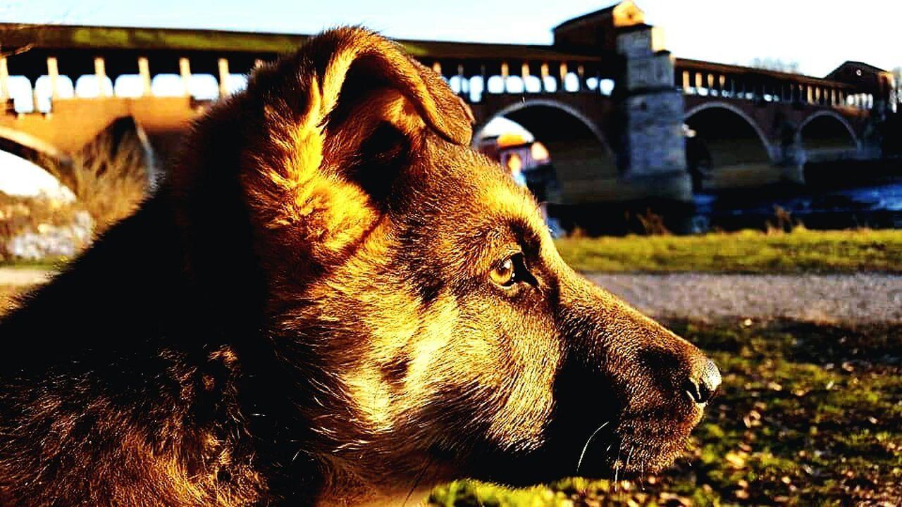 One Animal Animal Themes Pets Bridge - Man Made Structure Architecture Doggy Love Doglover Dog Lover Dog Portrait Dogoftheday DogLove Dogmodel Dogs Dog❤ Dogphoto Doggy Dog Photography Dog Domestic Animals City Travel Destinations No People Animal Head