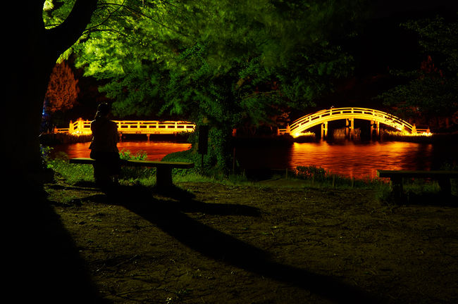Beauty In Nature Bridge - Man Made Structure Illuminated Light And Shadow Light Up Light Up Your Life Nature Night Lights Night Photography Night View Nightphotography Outdoors Shadows & Lights Temple Tree