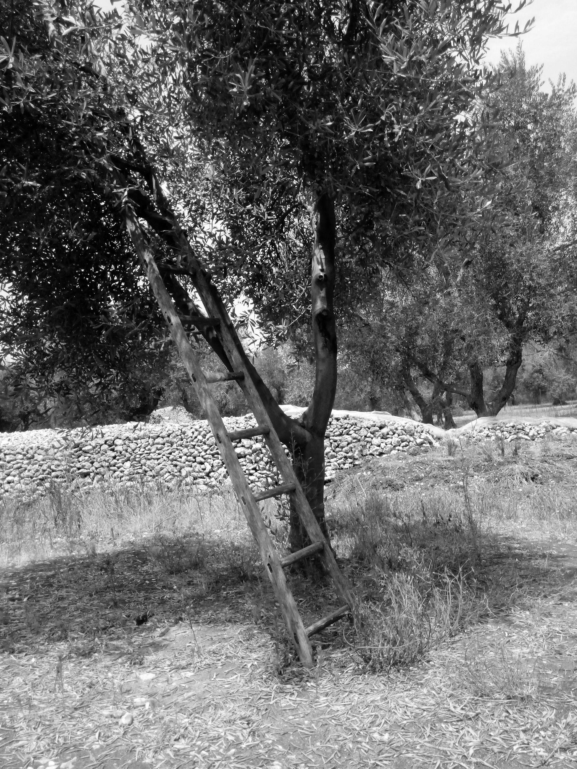 Alimini Survey Ulivi Scala Forgotten Blackandwhite EyEmNature