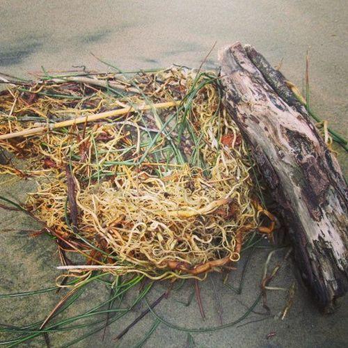 Rootsgrassdriftwood Oregoncoast Beachlife Sand Beach