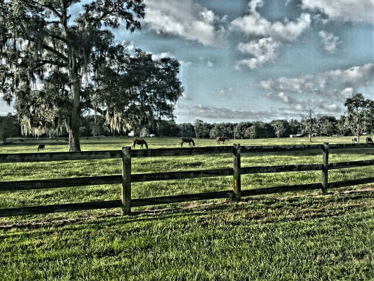 Learn & Shoot: Leading Lines Glitch Take A Look At The World Differently Check This Out Creative Light And Shadow I Love Horses Wooden Fence
