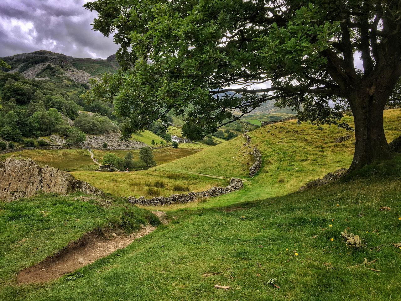 Landscape Tree No People Hiking Little Langdale Hills Hill Rock Bridleway Lake District