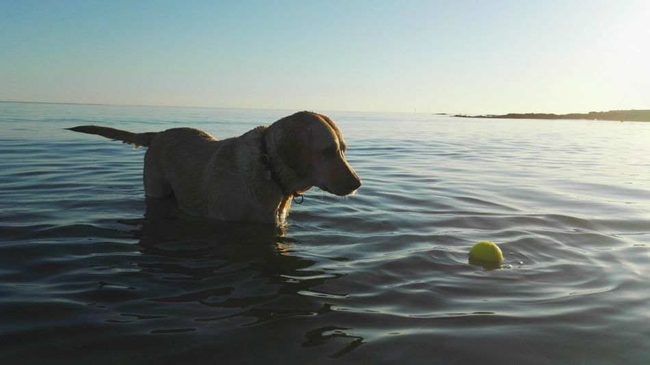 Beautiful stock photos of lustige tiere, Animal Themes, Ball, Beach, Beauty In Nature