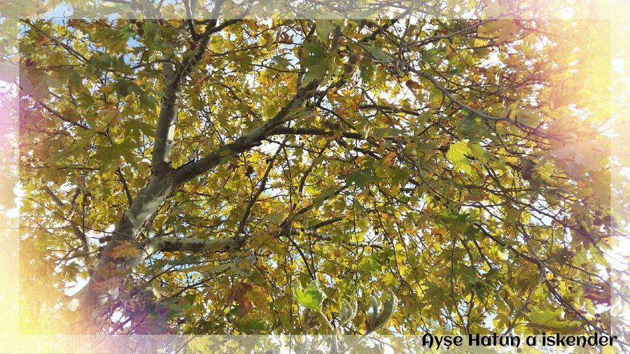 Photos First Eyeem Photo Neweyeem Turkey Autumn🍁🍁🍁 Autumnleaves #tree