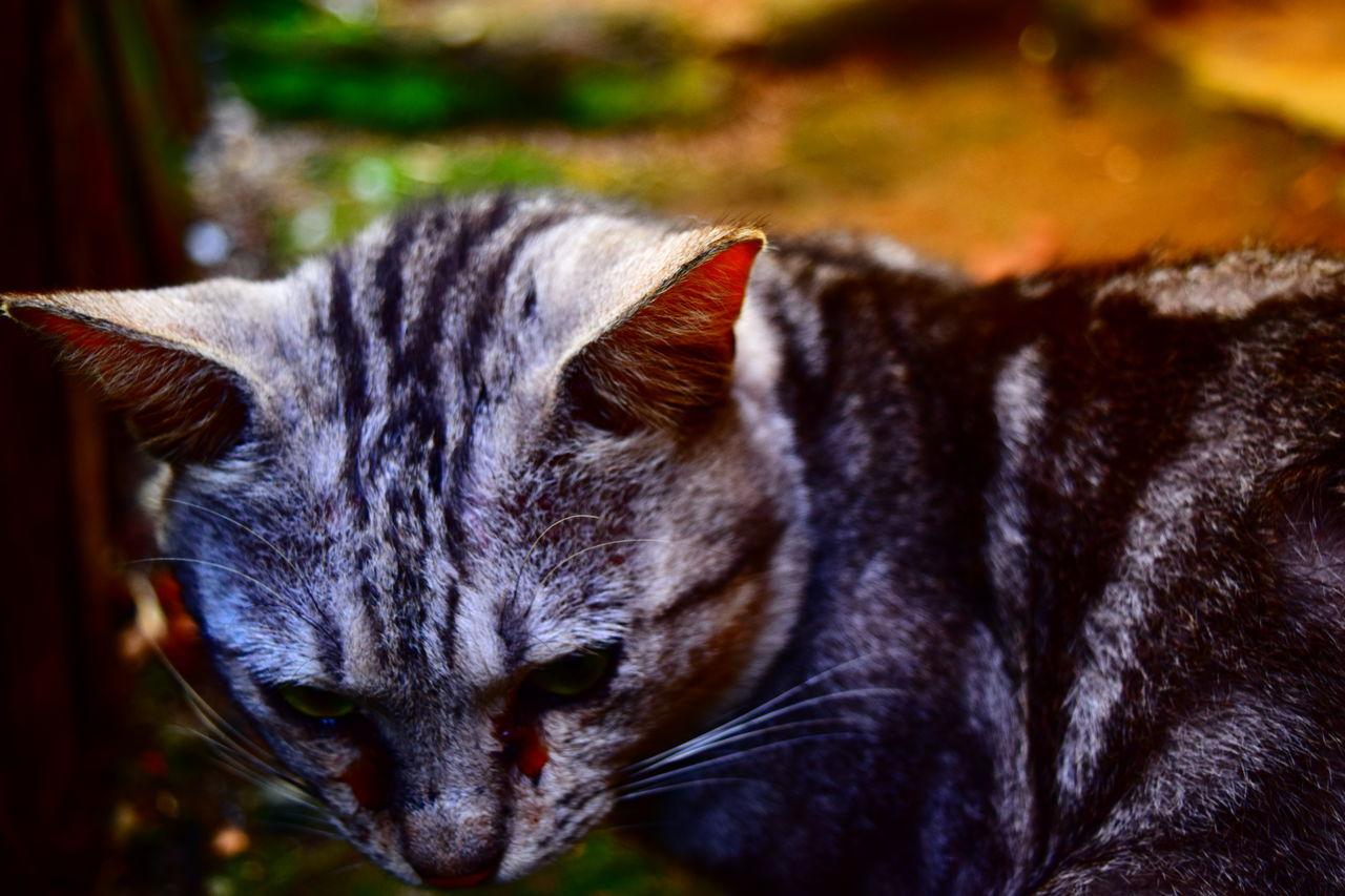 Cat garong First Eyeem Photo Nikond3300 Animal Animal Photography Collor