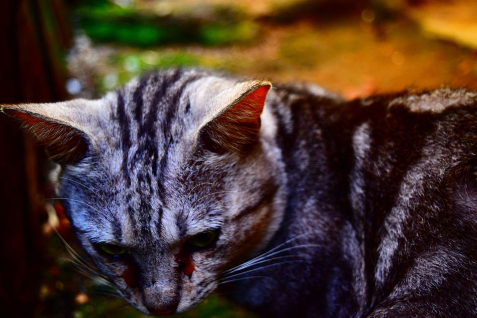 Cat garong First Eyeem Photo Nikond3300 Animal Animal Photography Collor