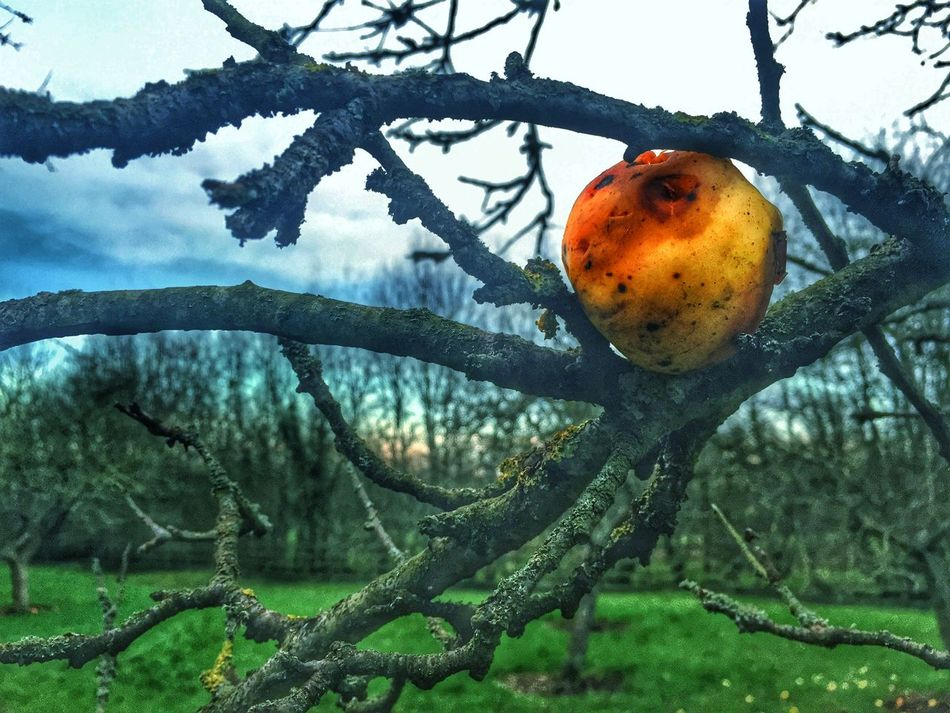 Rotting Apple Apple Nature Nature_collection Apple Orchard Apples Rotting Away