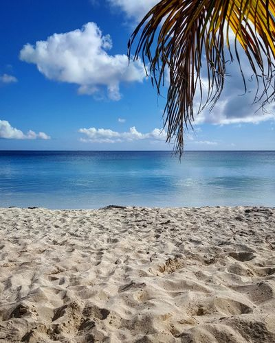 Vieques Puerto Rico Caribbean Beach Beachphotography Placid  Palm Tree Relax Vacation Sand Blue