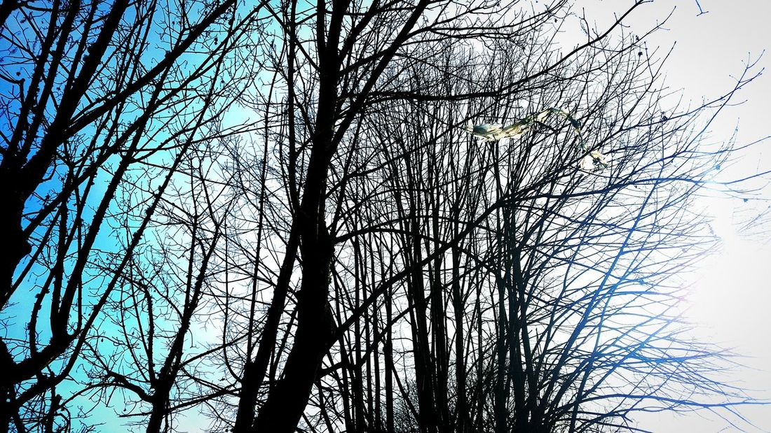 Trees Showcase: February Sky Blue Sky Nature Pure Light Plant Shots EyeEm My Side From My Point Of View Eyeemnaturelover Editing Point Of View Eyeemnature Naturelover Phonecamera PhonePhotography