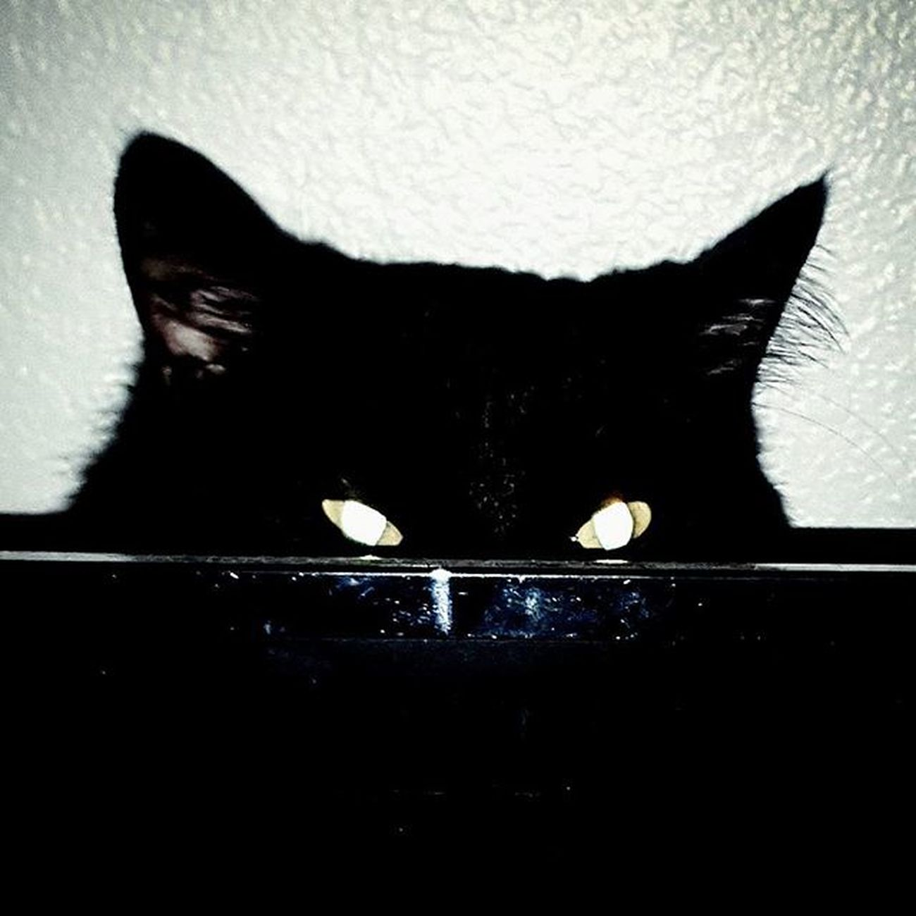 Petertheblackcat Creepin BLackCat Lookintomyeyes Demoncat