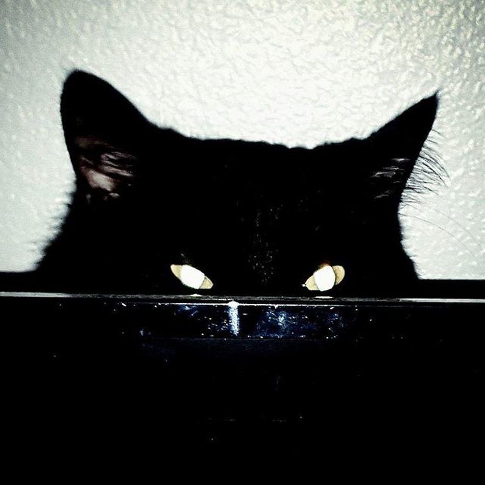 Petertheblackcat Creepin BLackCat Lookintomyeyes Demoncat