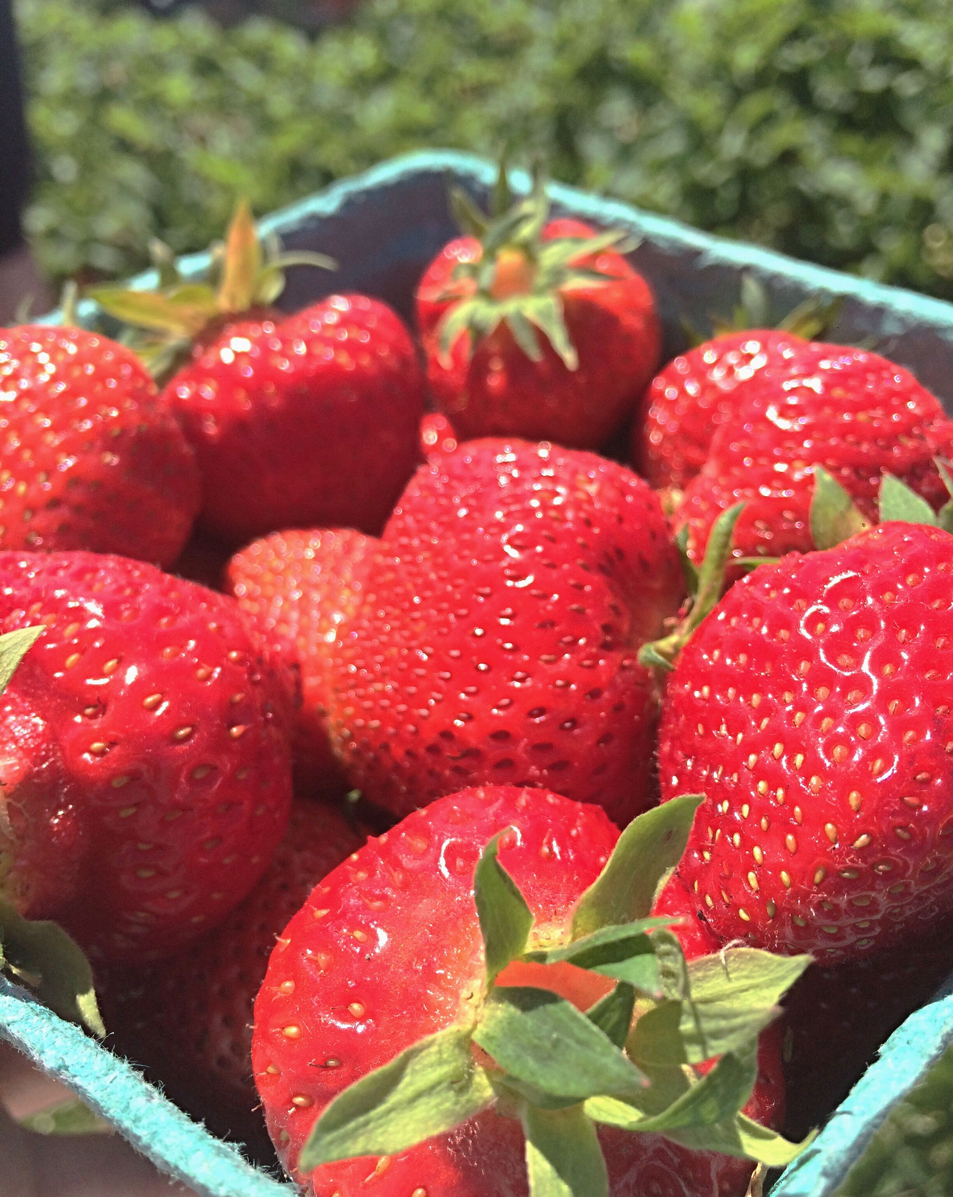 fruit, red, freshness, strawberry, food and drink, growth, food, day, close-up, healthy eating, leaf, outdoors, no people, water, nature