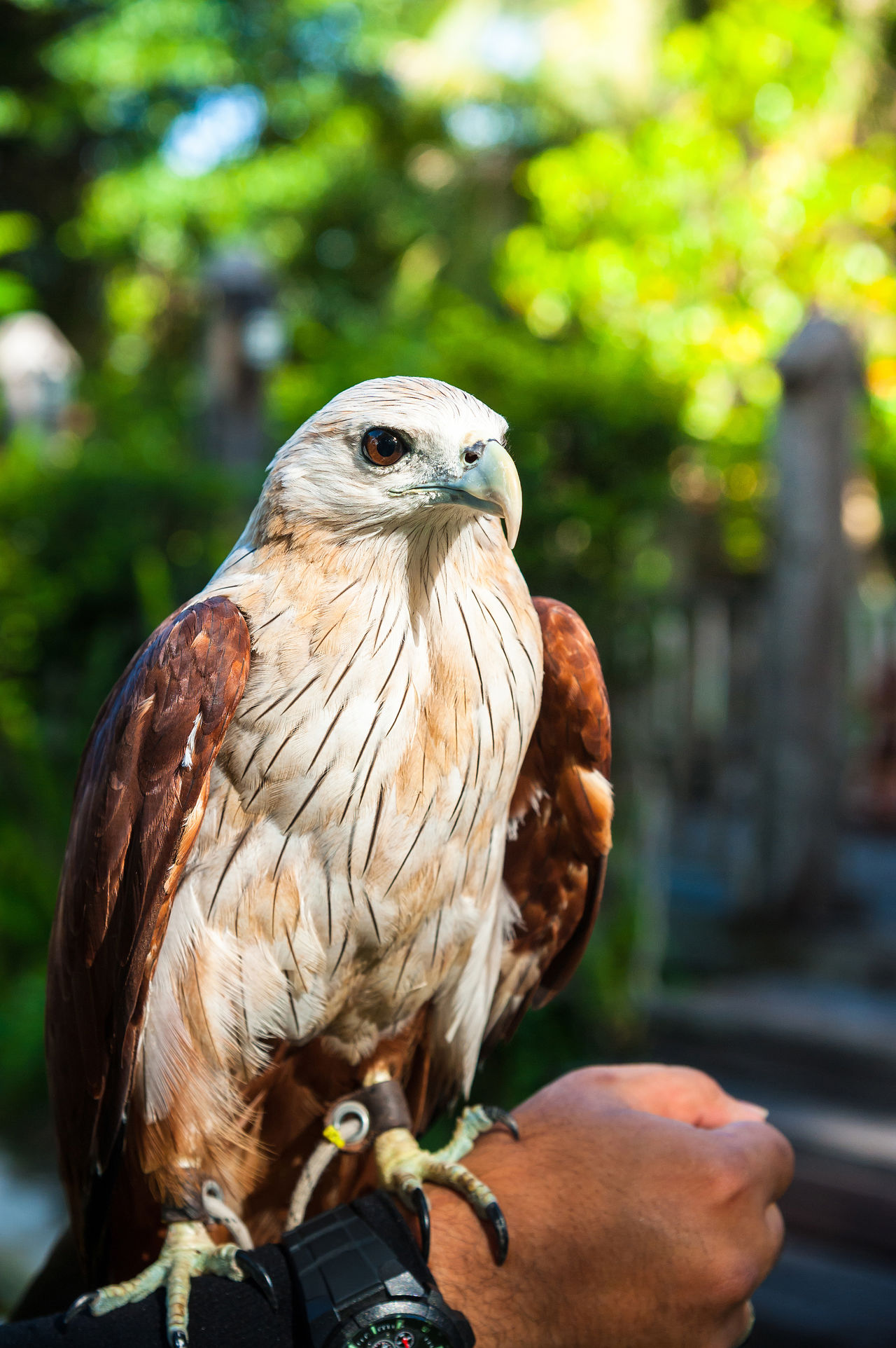 Animal Themes Animal Wildlife Animals In The Wild Bald Eagle Bird Bird Of Prey Close-up Eagle Falcon Feather  Fly Focus On Foreground Hawk Human Body Part Human Hand Hunter Nature One Animal Outdoors Perching Portrait Power Predator Predator And Prey Sparrow