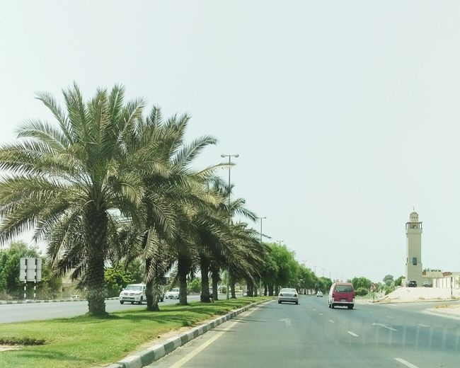 Sunny Day Hot Day Palm Trees Trees And Sky Treelined Treetastic Tree_captures Summertime Summer2016 Summer Days Summer Drive Hi!