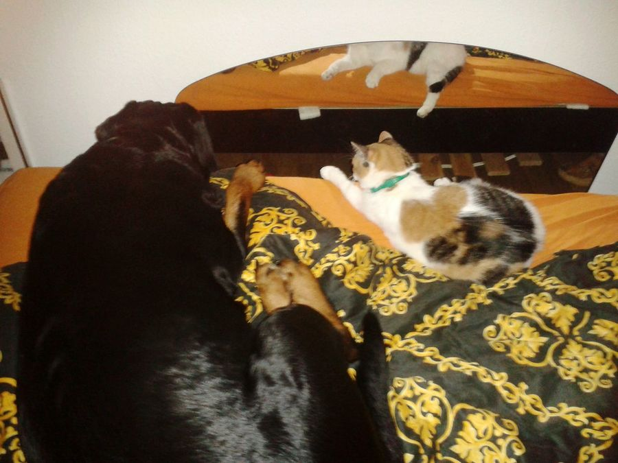 Pets Indoors  Animal Themes Lying Down Faulebande Lazy Sunday Katze Und Hund Lilli Mit Freya