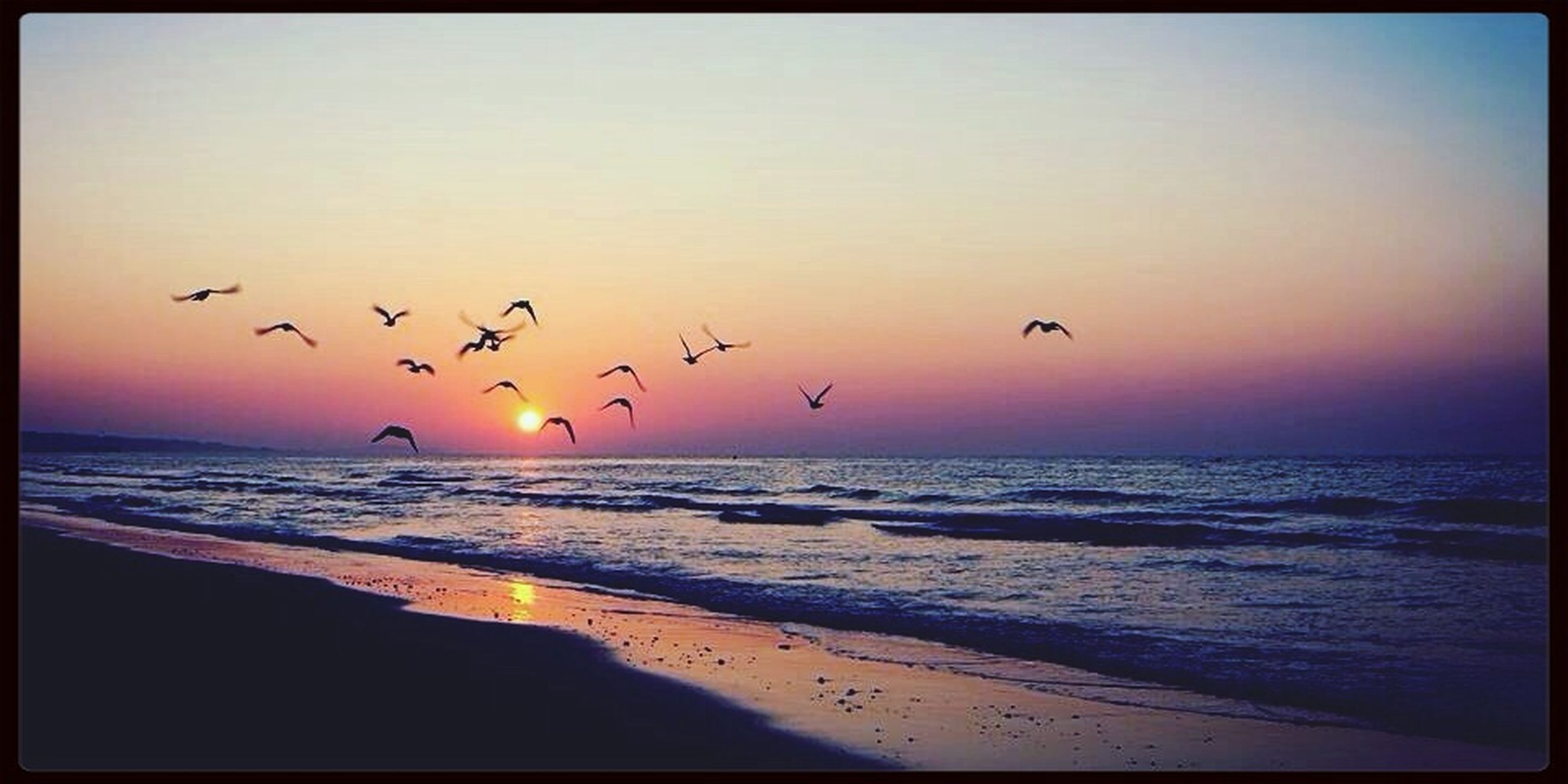 bird, flying, animal themes, sea, animals in the wild, wildlife, horizon over water, sunset, water, flock of birds, beach, scenics, beauty in nature, sky, transfer print, nature, tranquil scene, silhouette, shore