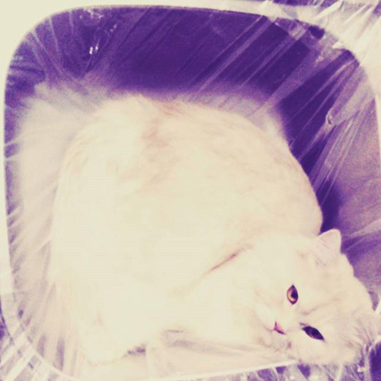 قطتي الكميلات لازم يشوف كل حاجه جديده ويعد جواها حشري اوي