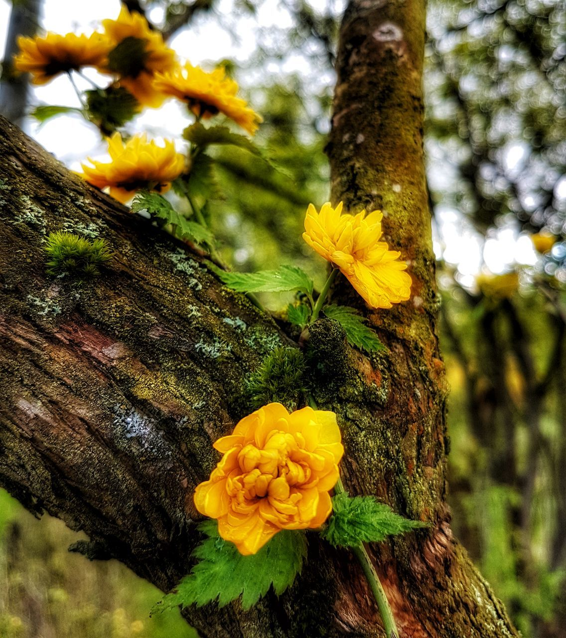 flower, growth, nature, fragility, beauty in nature, yellow, tree trunk, freshness, tree, no people, day, petal, close-up, outdoors, focus on foreground, flower head, plant