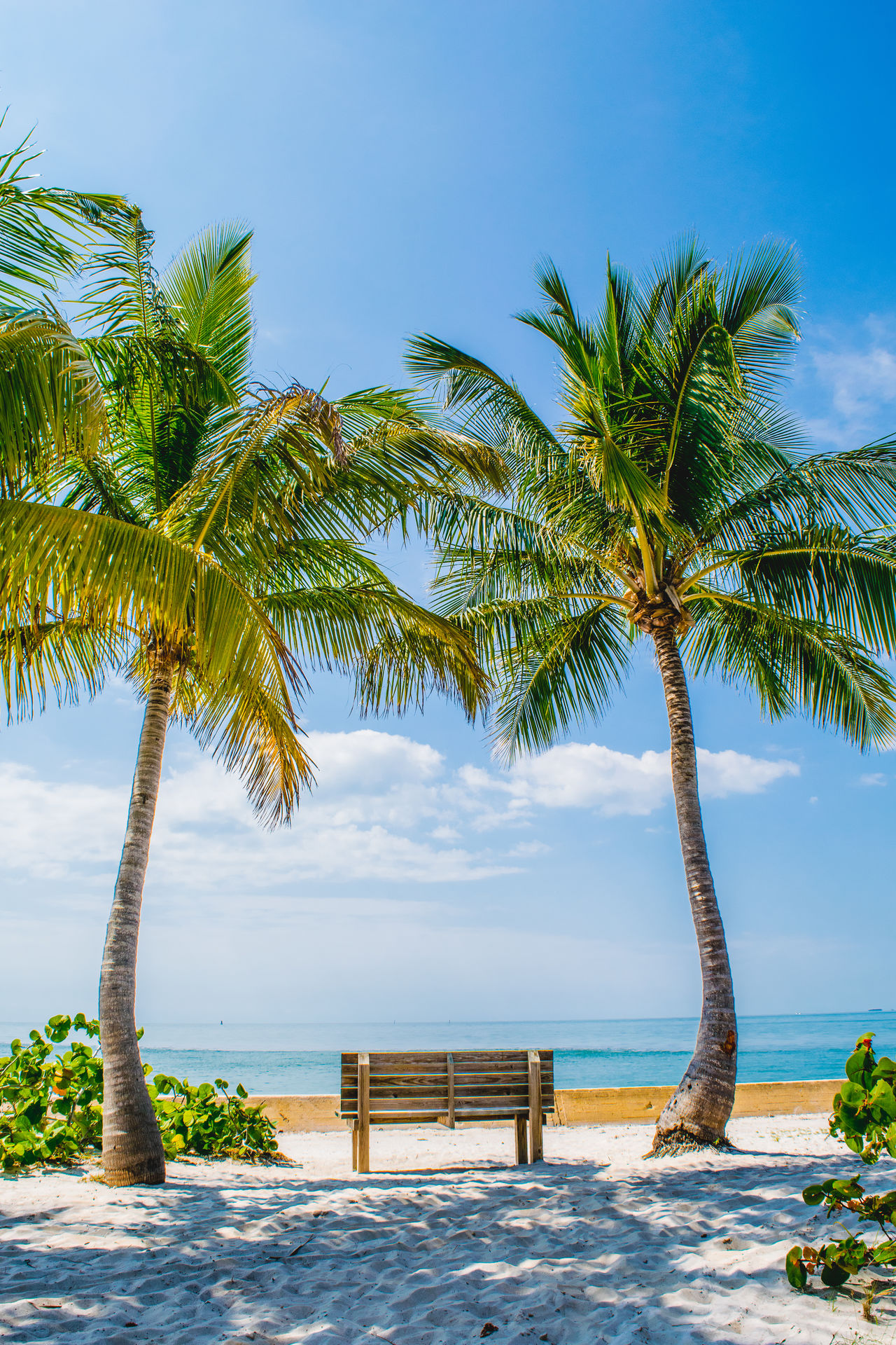 Beautiful stock photos of miami,  Beach,  Beauty,  Beauty In Nature,  Bench