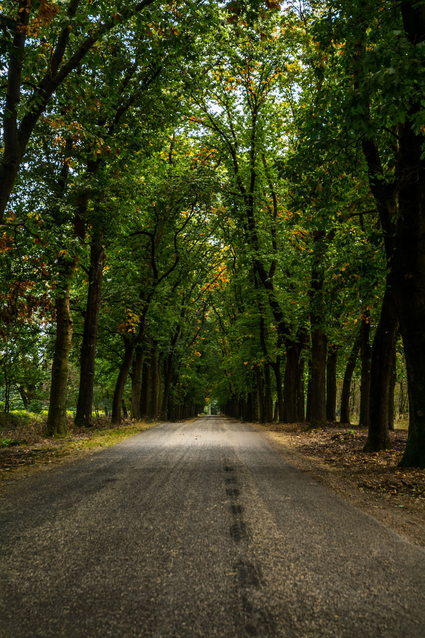 tree, road, the way forward, nature, tranquility, scenics, tranquil scene, outdoors, beauty in nature, forest, landscape, day, no people