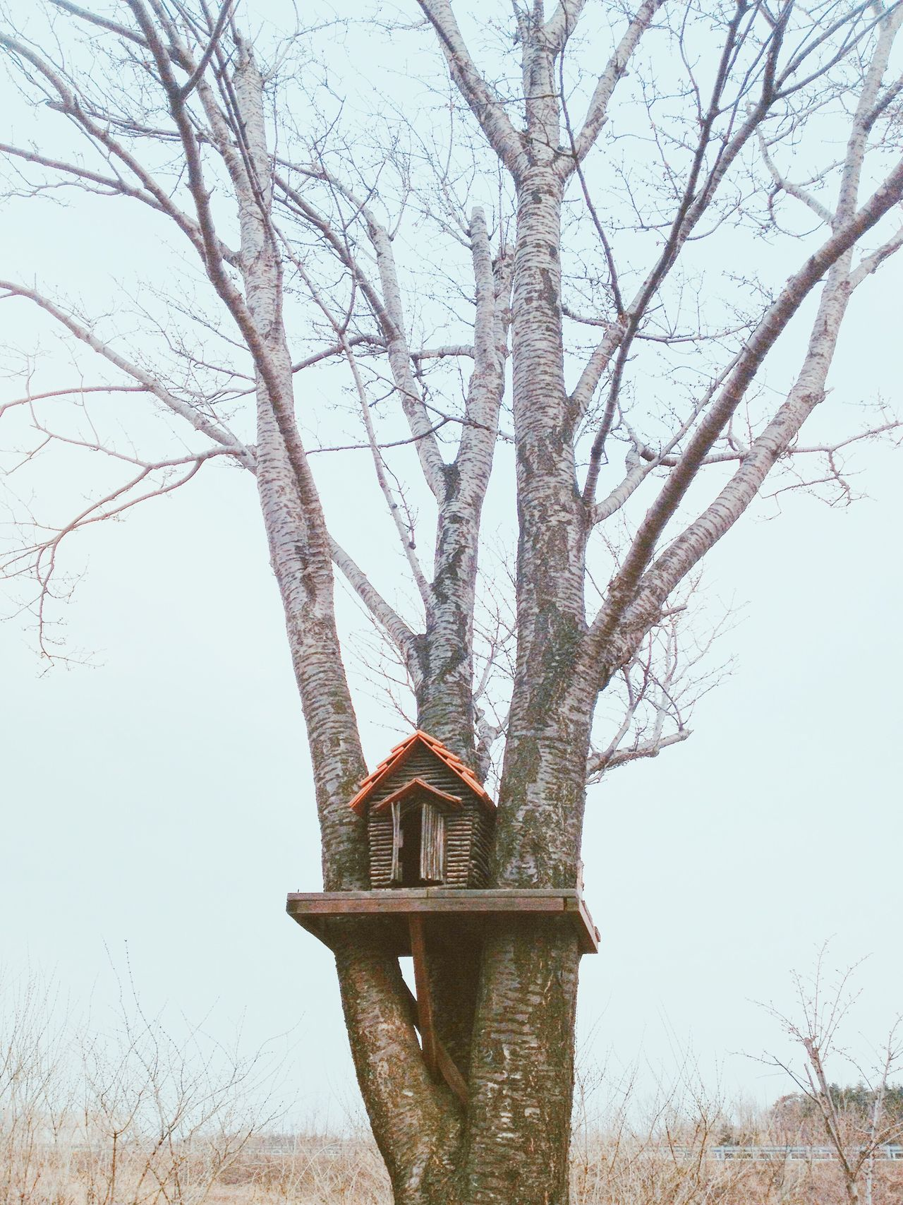 Wood Tree Nest Nature Birdhouse Bird Forest Winter House Box Hole Outsde Wooden Habitat Feed  Feeder Sky EyeEmNewHere EyeEmNewHere