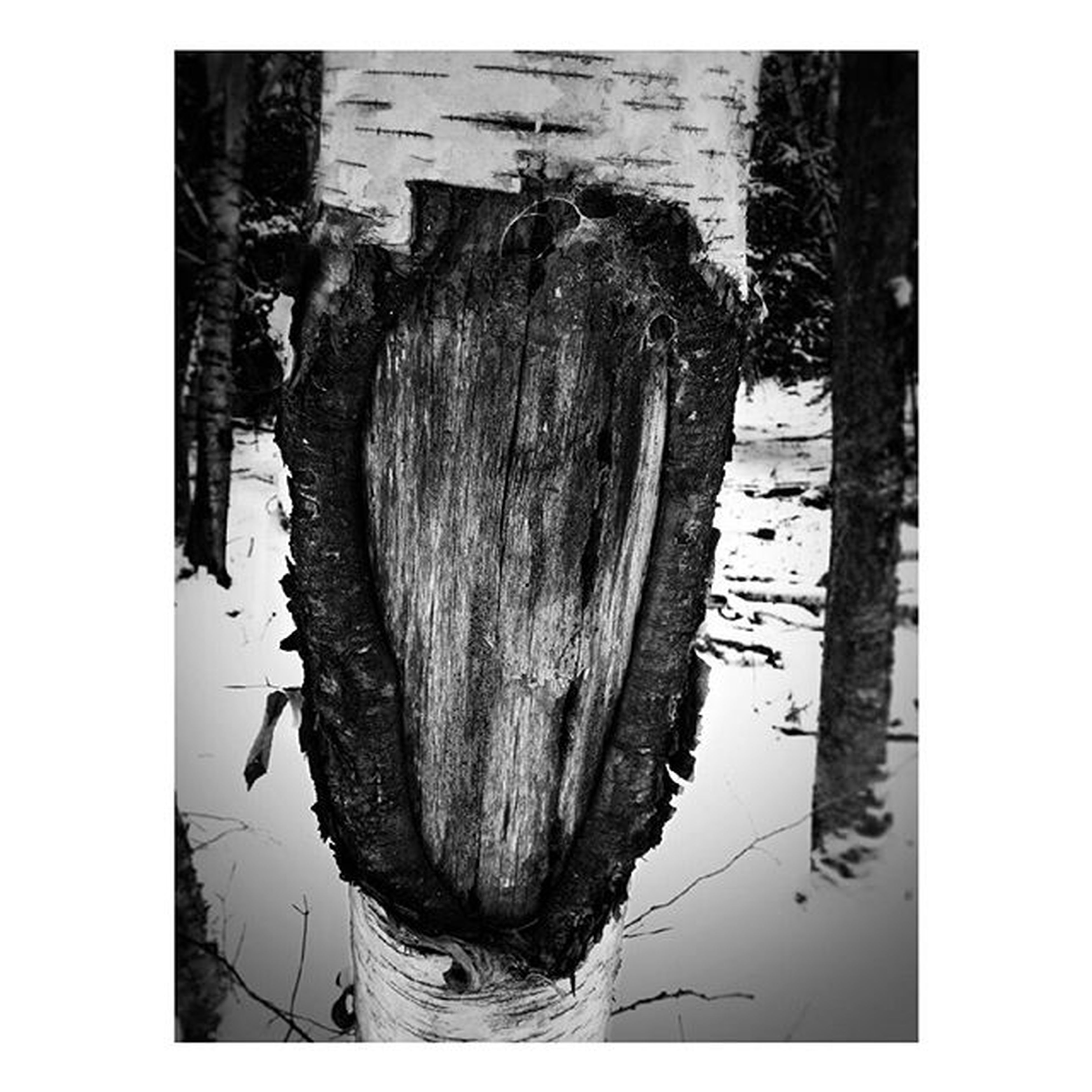 transfer print, auto post production filter, water, reflection, high angle view, nature, tranquility, wood - material, lake, tree, day, outdoors, waterfront, river, rock - object, no people, tranquil scene, tree trunk, beauty in nature, standing water