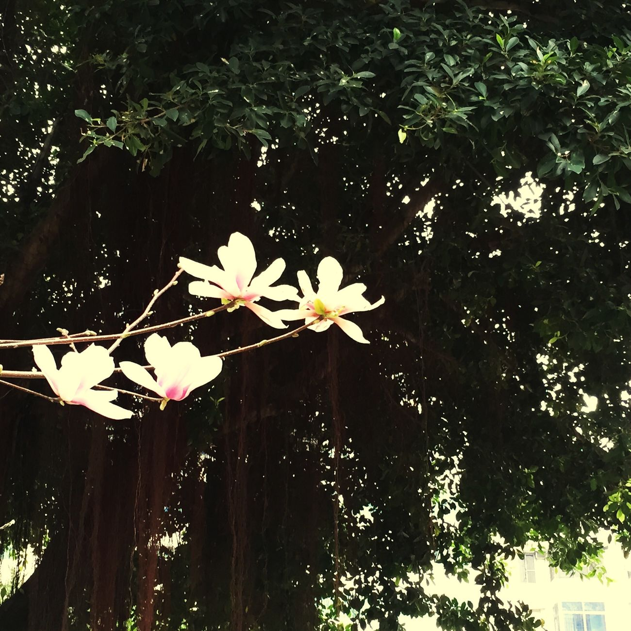 春里花开,梦里醒来,谁在树下等待,谁在畅笑开怀