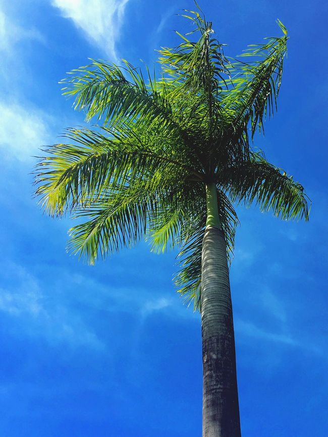 Palm Trees Check This Out Beautiful Nature Green Blue Sky Sunny Day EyeEm Nature Lover Eyemphotography Instanature Tumblr Style.
