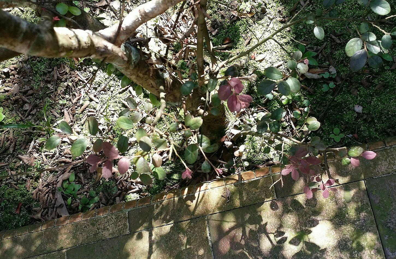 Plants Shadowandlight Former Home 29 Years Mum's Home Of 39 Years Memories Singapore