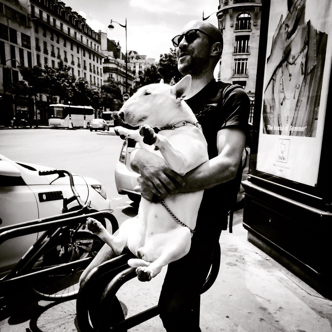 Sitting Bull | snapshot in Paris nearby Opera Garnier City Life Street City Building Exterior Car Outdoors Mode Of Transport Real People Land Vehicle Dog Day One Animal Architecture Pets Men Young Adult Built Structure One Person Mammal Adult (null) The Street Photographer - 2017 EyeEm Awards The Photojournalist - 2017 EyeEm Awards