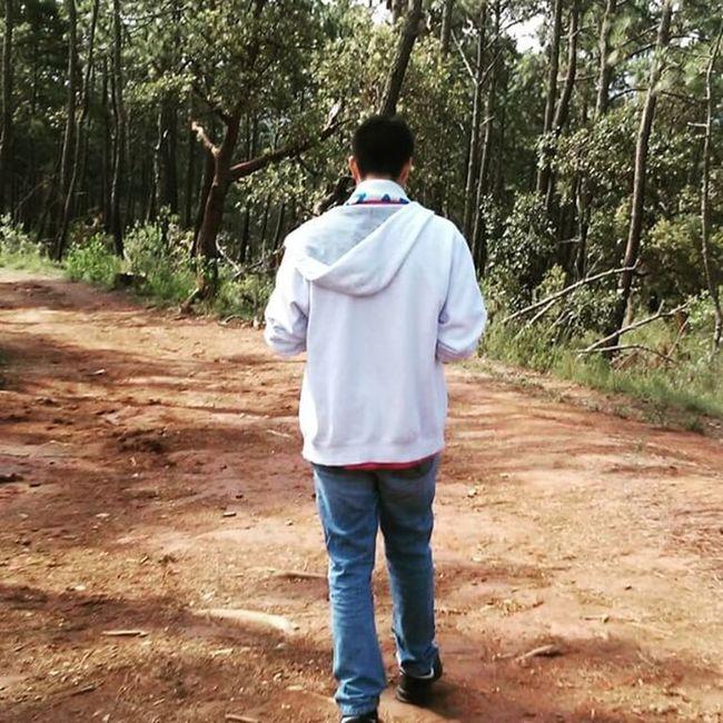 No hay nada más bonito que un bosque en temporada de lluvias. Aire Bosque Lluvias