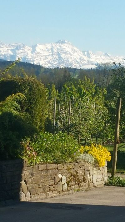 Outdoors No People Tree Day Nature Beauty In Nature Sky Mountain Tree Field Freshness Beauty In Nature EyeEm Nature Lover Green Color Switzerland❤️ Egnach My Place.💚 Garden