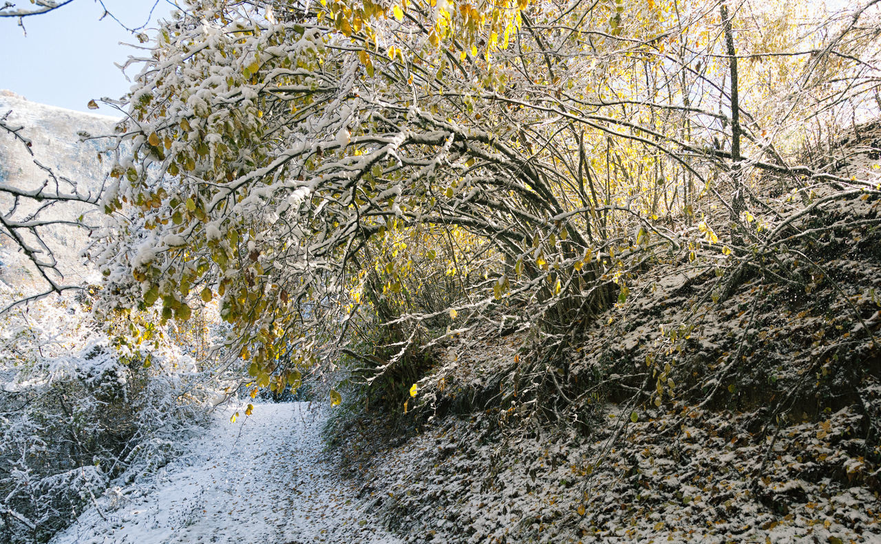 Snowy Backroads Backroads Beauty In Nature Bolu..TURKEY Branch Close-up Growth Low Angle View Mountains Nature Outdoors Roads Sky Tranquility Tree Treescape Willow Tree Winter Winter Wonderland Wintertime Yellow