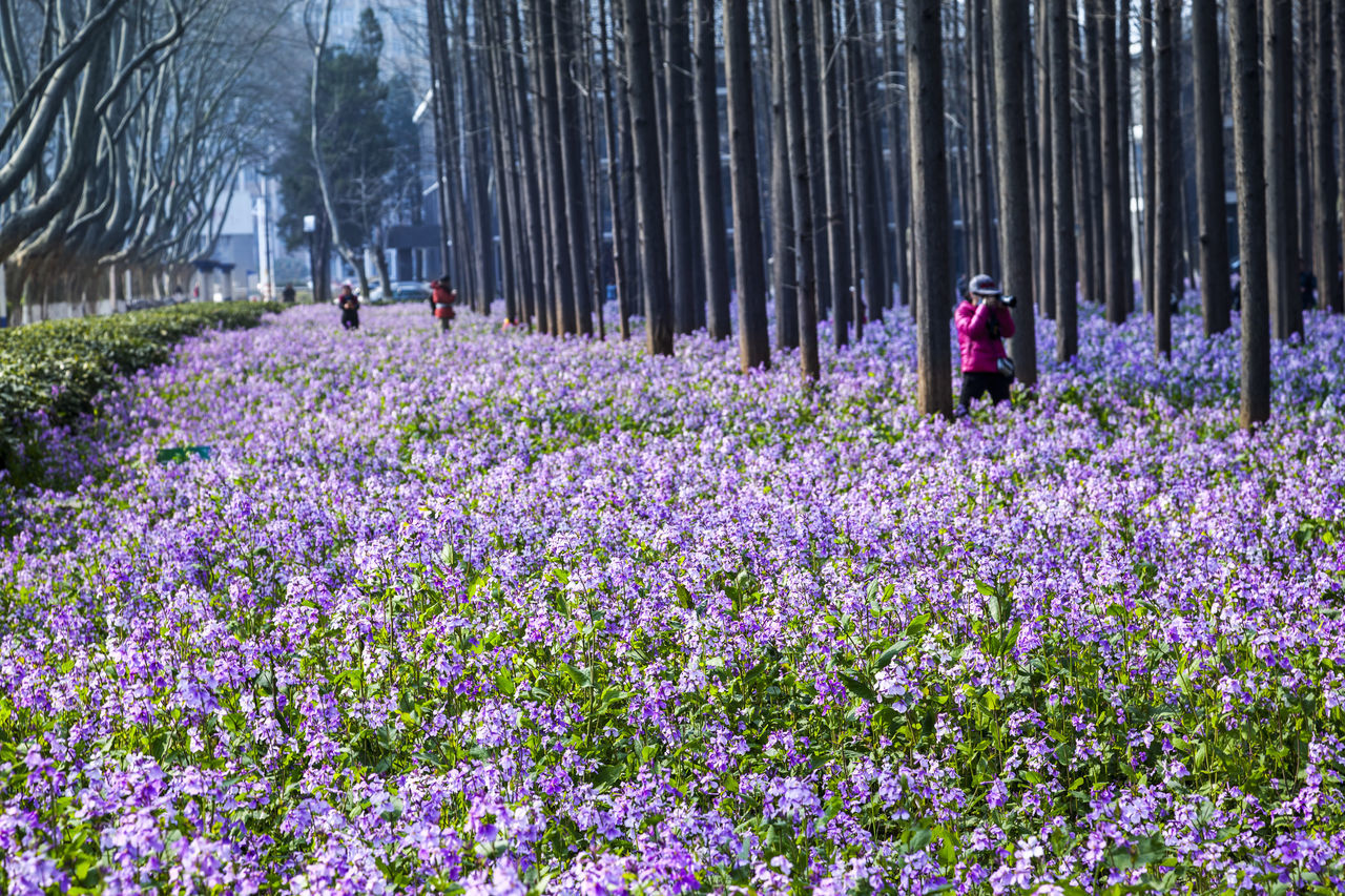 February Orchid Beauty In Nature Blossom Blue February Orchid Flower Growth In Bloom Nature Outdoors Plant China February Orchid February Orchid Freshness Purple Yew