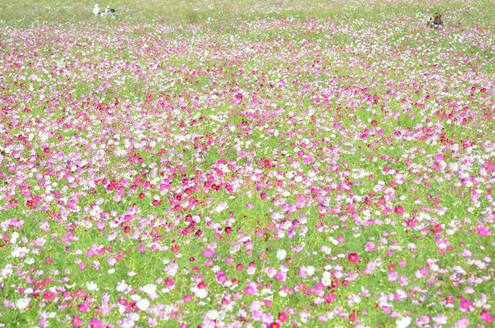 Colors Of Autumn Keicomoment Flowers Love Nature