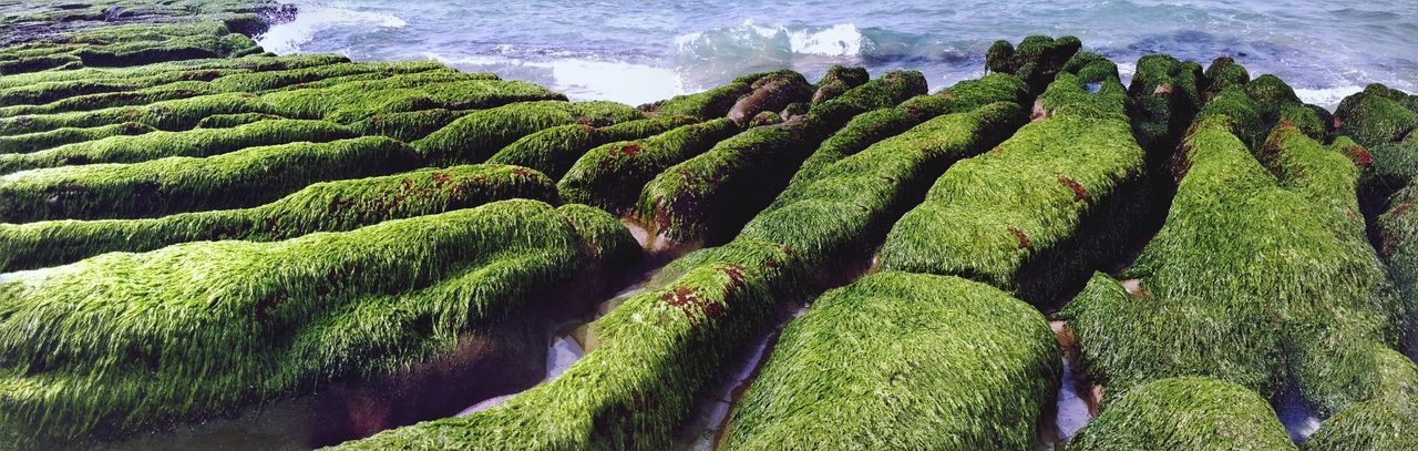 Panoramic Shot Of Moss Covered Rocks On Sea Shore