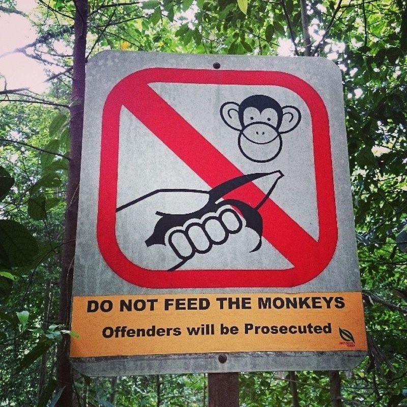 Don't feed the monkeys Nature Sign Monkeys