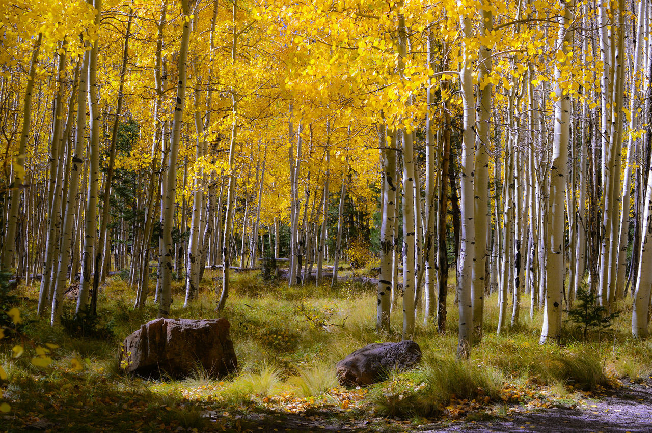 The Coming of Fall Tree Forest WoodLand Tranquil Scene Beauty In Nature Scenics Non-urban Scene Autumn Season  Yellow Remote Outdoors Nature Change Tranquility Changing Colours Trees Leaves Colors Nature Nature Photography Nikon D3200 Outdoor Photography Love Nowhere