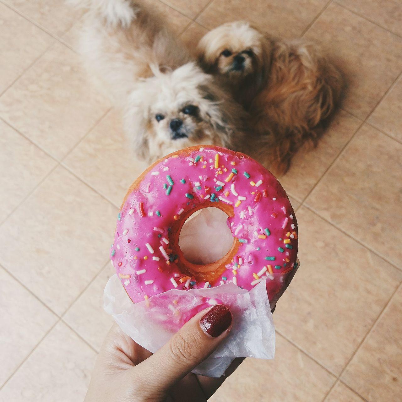 Beautiful stock photos of welpen, Animal Themes, Cropped, Dessert, Dog