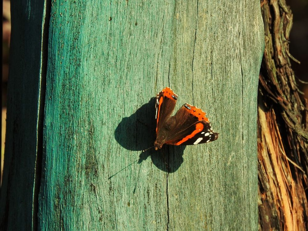 Beauty In Nature Butterflies Butterfly Butterfly - Insect Butterfly Macro Butterfly Wings Butterfly ❤ Close-up Full Frame Nature Nature Photography No People Wildlife Wildlife & Nature Wing Wings Wood Wood - Material Wooden