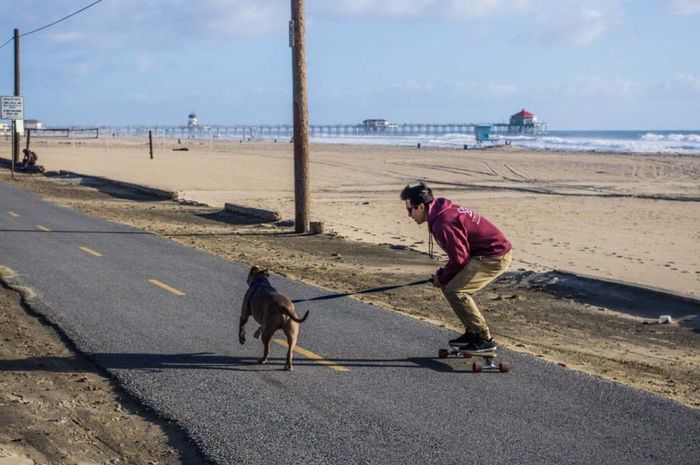 A man and his best friend. Domestic Animals One Animal Real People Mammal Dog Pets One Person Full Length Men Day Outdoors Beach Water Nature Pet Clothing Sky Pitbull Skateboarding Skate Skateboard Beach Life Saltwater Surfing Pentax Kx Huntington Beach