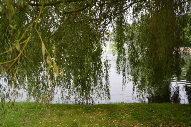 Beauty In Nature Day Grass Grassy Green Green Color Growth Idyllic Lake Lakeshore Landscape Nature No People Non Urban Scene Non-urban Scene Outdoors Plant Reflection Remote Rippled Scenics Tranquil Scene Tranquility Tree Water