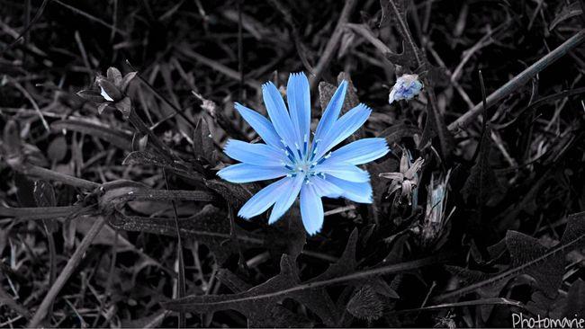 • Tel une fleur une fois au sol la graine fleurira • Macro Flower Blue Flower Grey Blue Grey And Blue Rouche De Couleur Passion Photographer