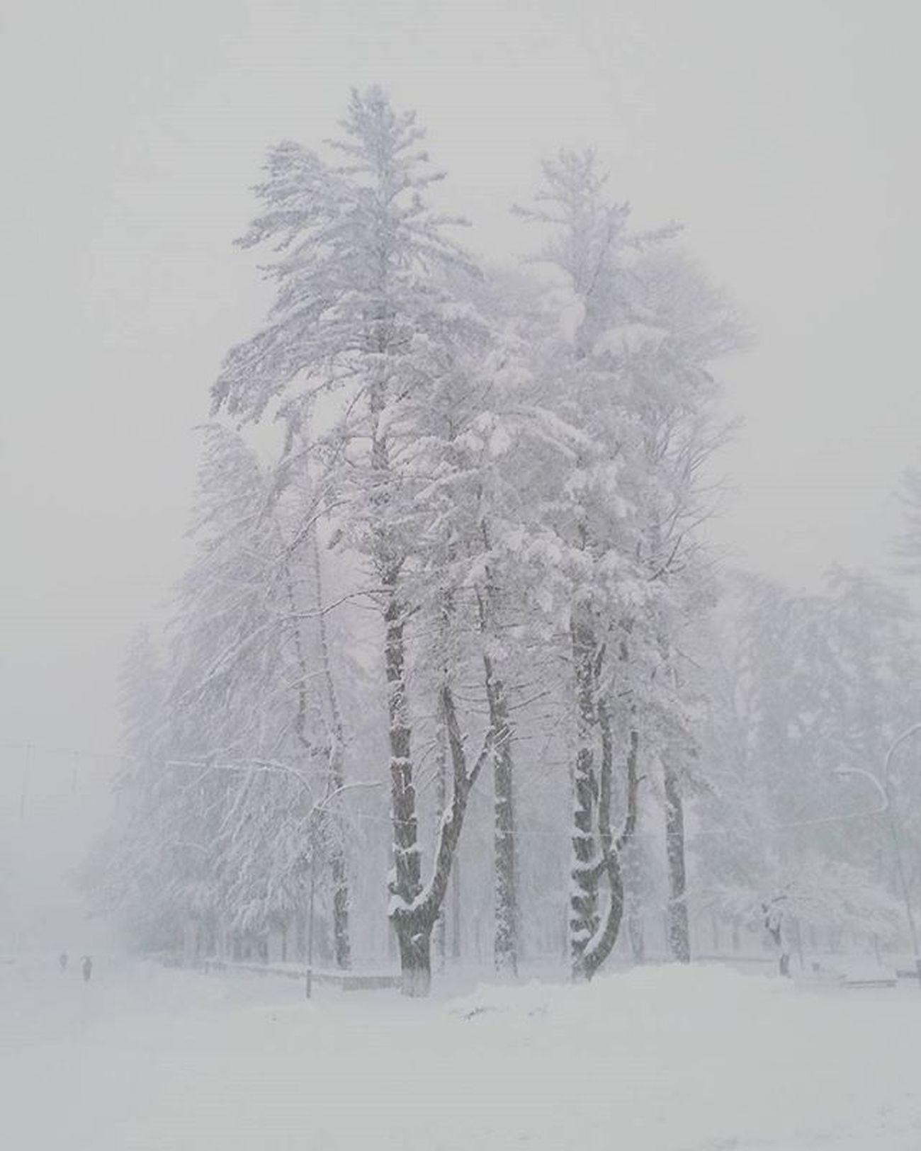 გუშინ ცისფერი, მოწმენდილი ცა იყო, დღეს დიდი თოვლი და საშიში ამინდია. Snow Snowy Tsalenjikha💛❤🌽🍁🐞🍀 White Cold Winter Nature