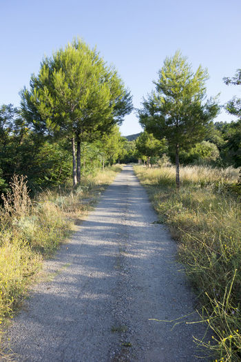 Bike Castellón Clear Sky Cycling Day Diminishing Perspective Grass Greenway Landscape Nature Nature No People Ojos Negros Outdoors Road Scenics SPAIN Sunlight The Way Forward Tranquil Scene Tranquility Tree València Via Verde Way